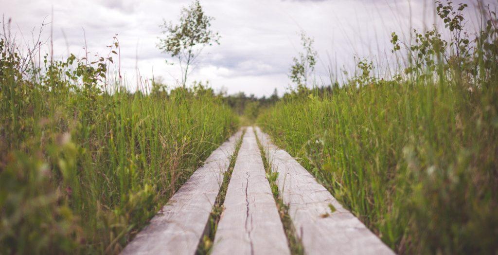 psicoterapia camino